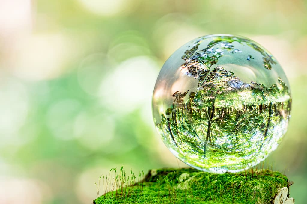 trees reflective in glass globe