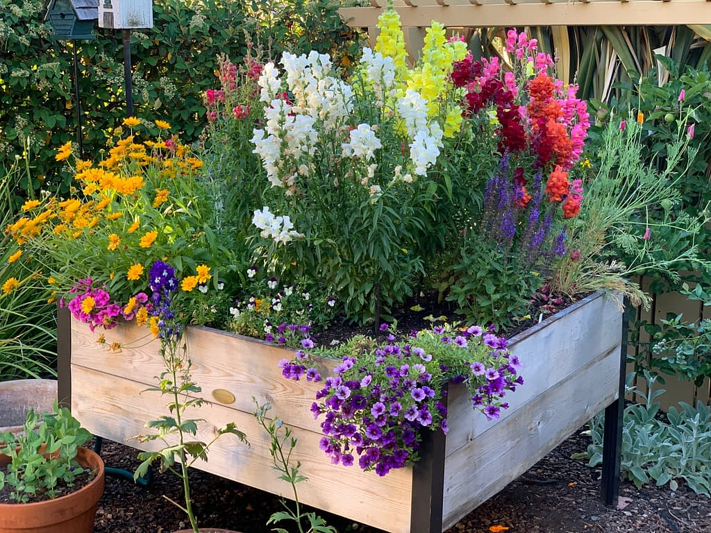 Toni Gattone's flower elevated raised bed overflows with an abundance of blossoms this year.