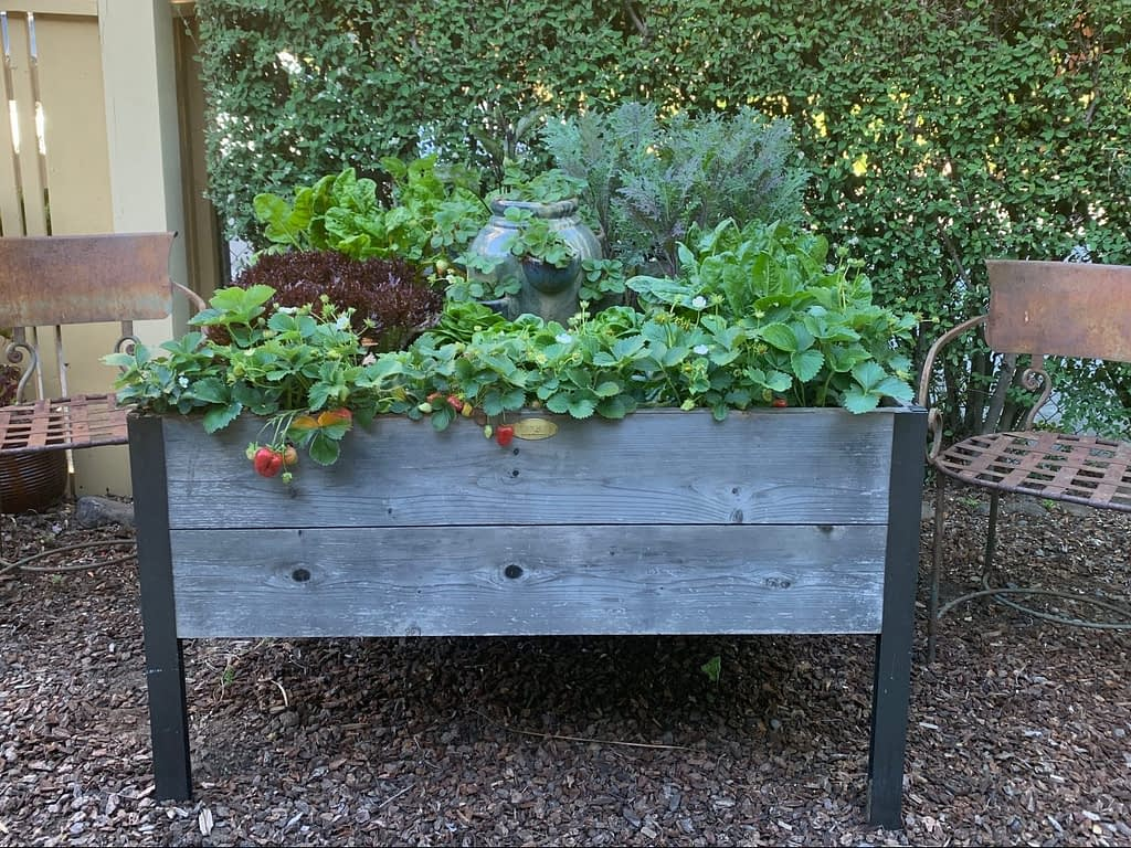 A look at gardener Toni Gattone's Spring 2020 veggie elevated raised bed with broccoli and kale, swiss chard, spinach, two kinds of lettuce and strawberries