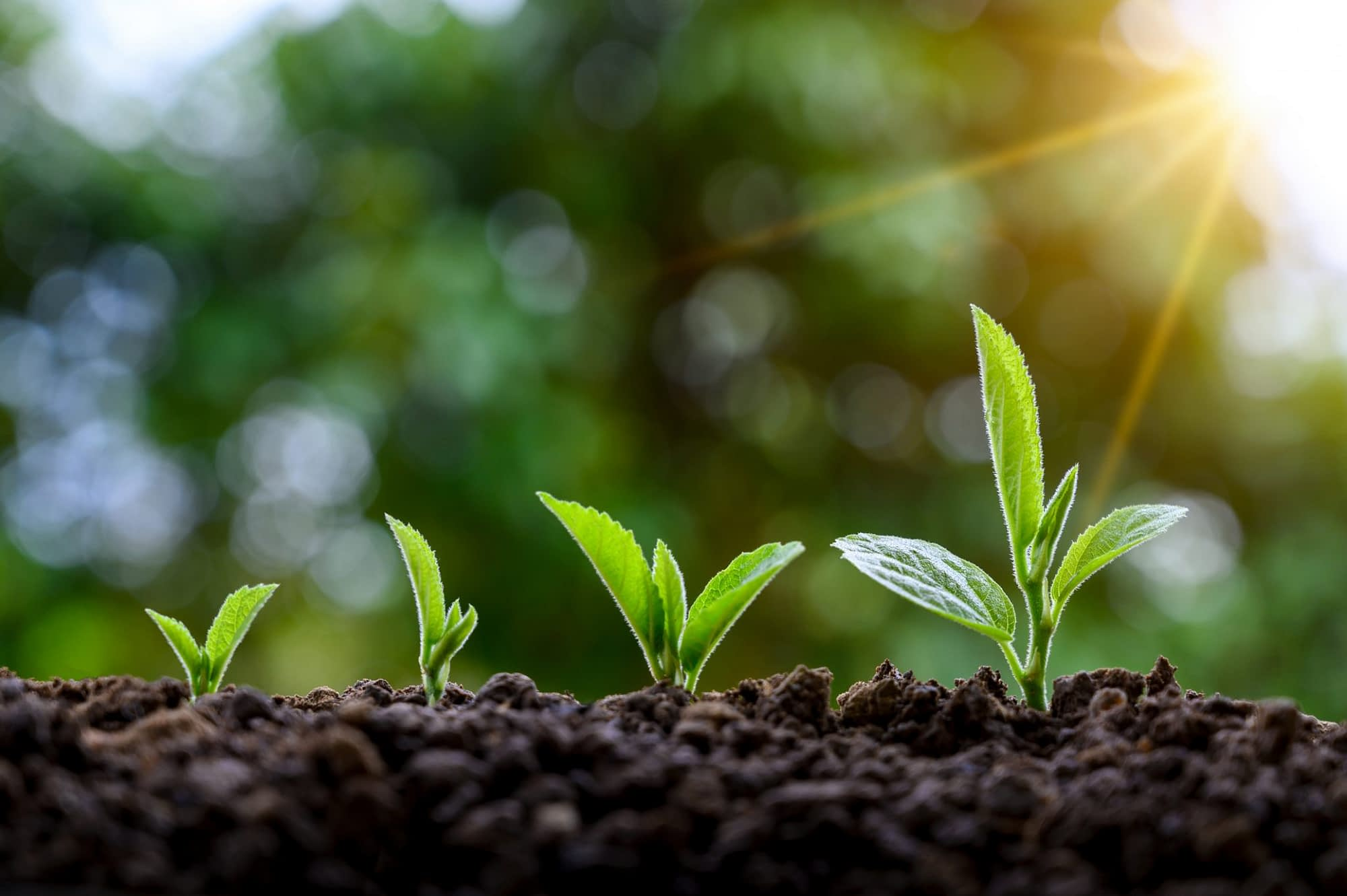 Development of seedling growth Planting seedlings young plant in the morning light on nature background