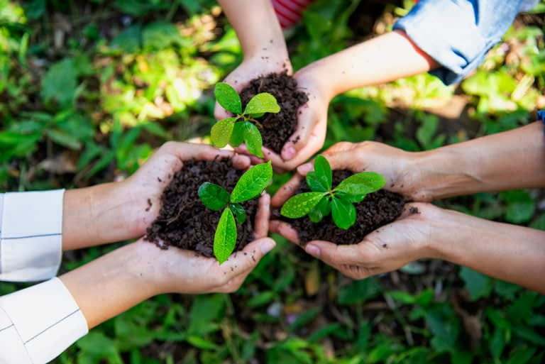 hands holding young plants or seedlings
